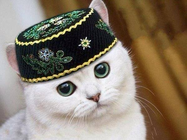 Приветик родная, татарские открытки прикольные