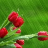 НӘҮРҮЗ МӘСКӘҮГӘ «КҮЧӘ»